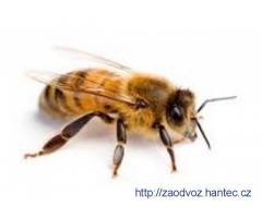 Včelařské vybavení, včelstva